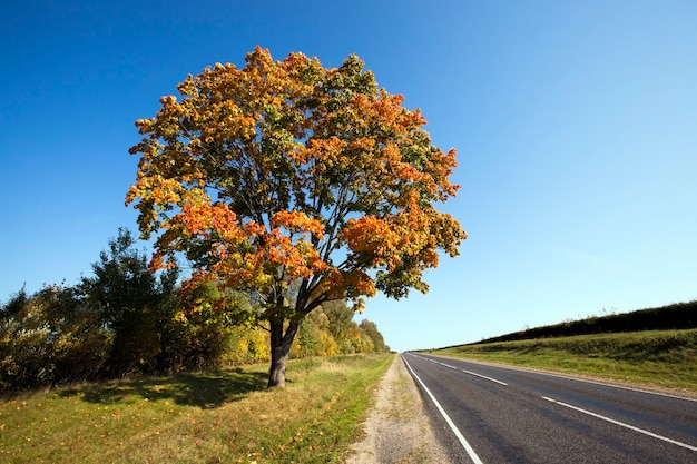 Asfaltowana autostrada w sezonie jesiennym. białoruś