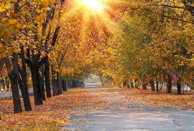 Asfaltowy chodnik pośrodku drzew z żółtymi liśćmi