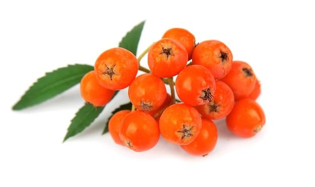 Ashberry na białym tle