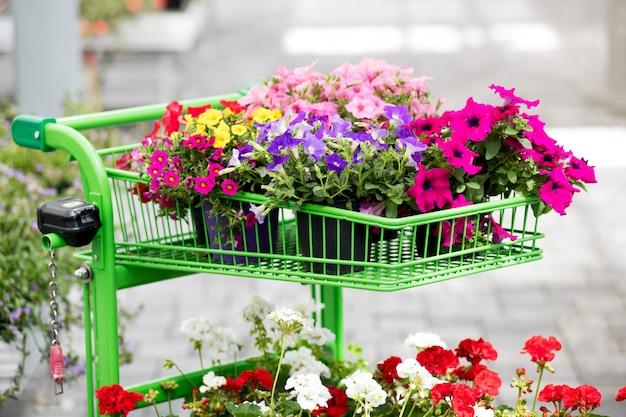 Asortyment kolorowych kwiatów letnich