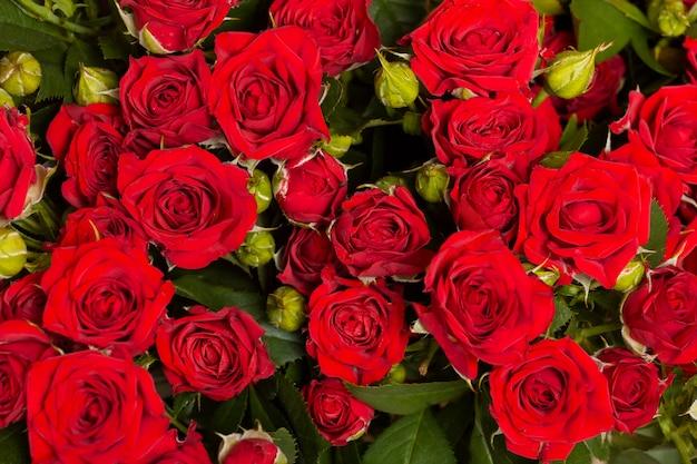 Asortyment pięknych kwiatów w tle