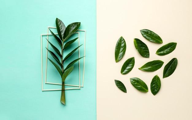 Asortyment płaskich zielonych liści