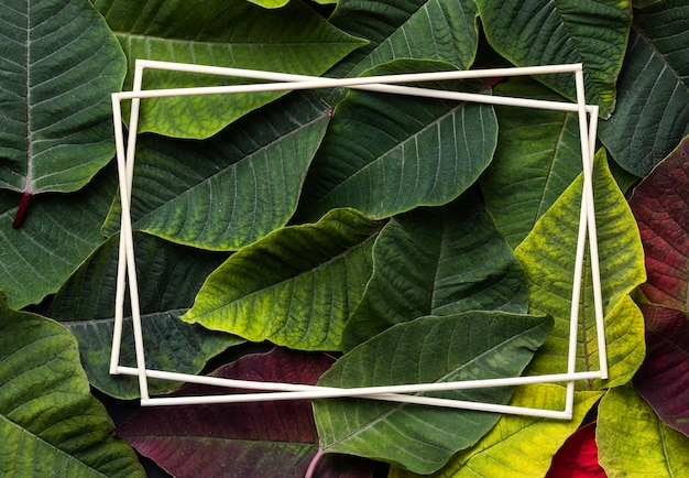 Asortyment różnych liści z pustymi ramkami
