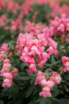 Asortyment z pięknymi różowymi kwiatami