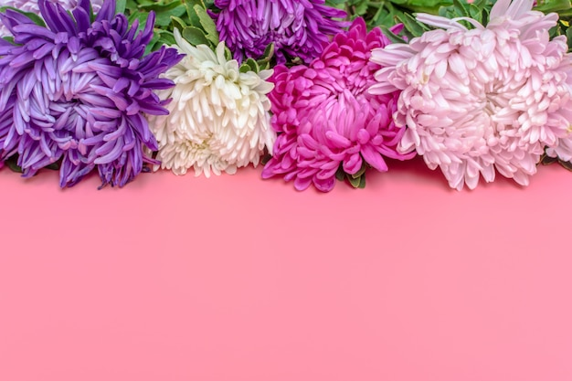 Aster kwiaty na pastelowym różowym kolorze tła. leżał płasko.