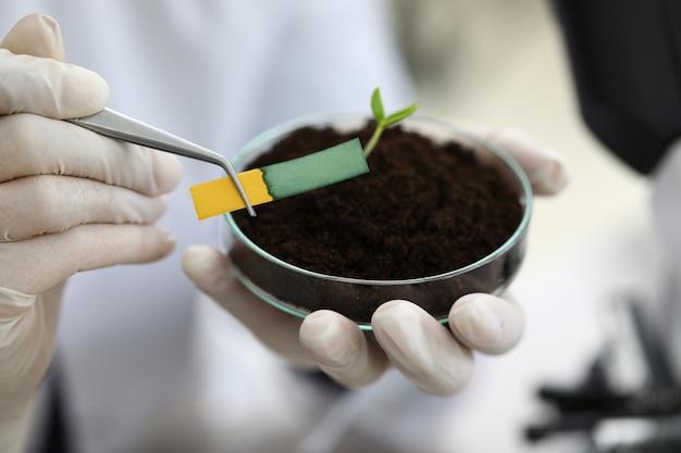 Asystent w laboratorium trzyma szczypce do papieru lakmusowego