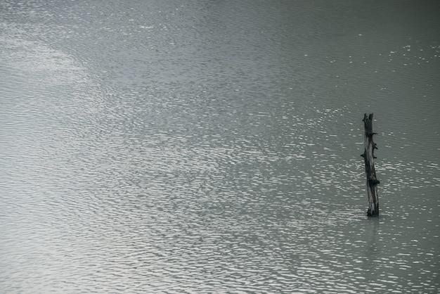 Atmosferyczny charakter tła z pnia drzewa w błyszczącej powierzchni wody jeziora z tętnienia. jeden szkopuł w szarej wodzie górskiego jeziora. minimalistyczne tło natury srebrnej powierzchni wody z samym szkopułem.