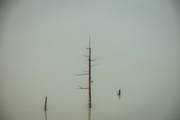 Atmosferyczny charakter tła z pnia drzewa w głębokiej zielonej powierzchni wody jeziora. martwe drzewo w błękitnej wodzie górskiego jeziora. minimalne tło natura ciemne turkusowe wody z pnia starego drzewa.
