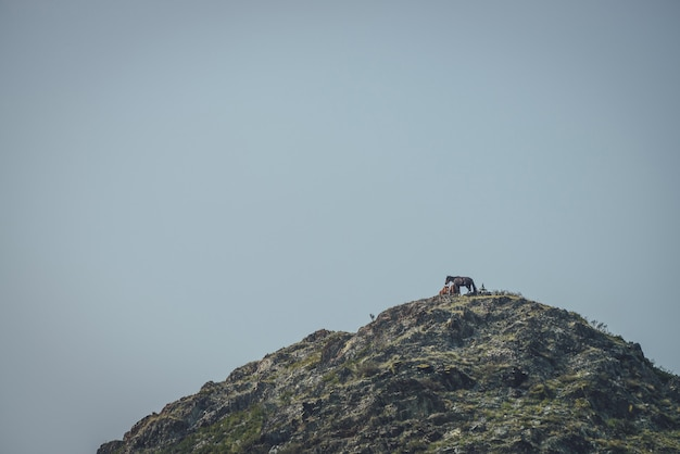 Atmosferyczny krajobraz górski z końmi wysoko na szczycie góry pod błękitnym niebem w zmierzchu. minimalistyczny krajobraz przyrody z koniem na szarej skale pod zmierzchem. górski minimalizm z końmi.