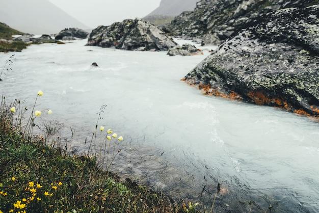 Atmosferyczny krajobraz z małymi żółtymi kwiatami w pobliżu górskiej rzeki wśród moren w deszczową pogodę. ponura sceneria z mleczną rzeką wśród skał. ponury widok na dojną górską rzekę i żółte kwiaty.
