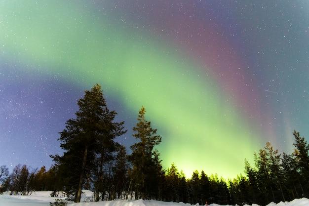 Aurora borealis o różnych kolorach (zielonym i czerwonym) nad lasem sosnowym