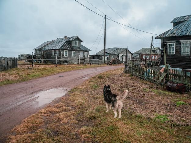 Autentyczna wioska nad brzegiem zatoki kandalaksha na morzu białym