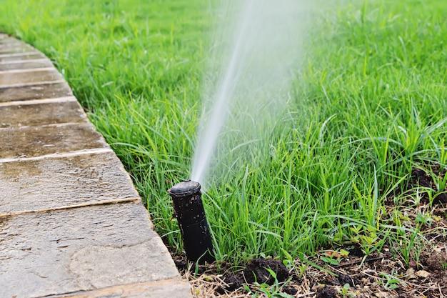 Automatyczny zraszacz trawnika podlewający zieloną trawę