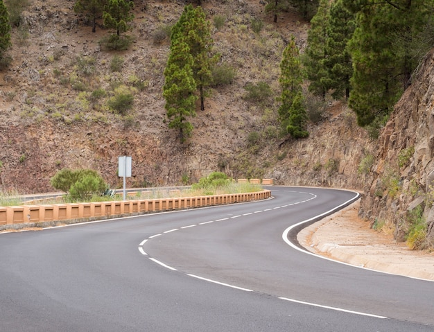 Autostrada otoczona sosnami