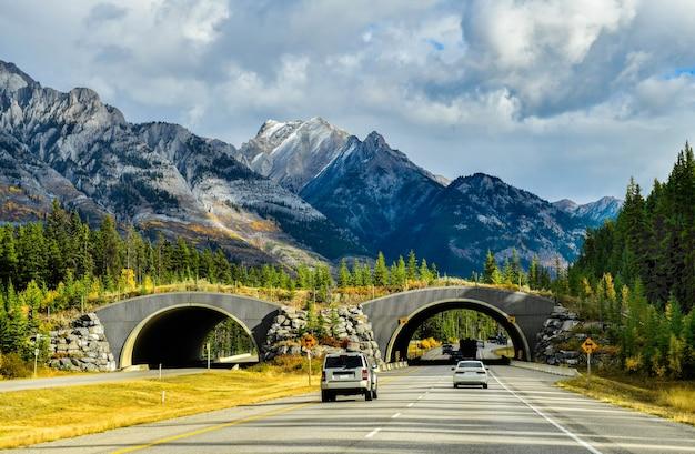 Autostrada transcanada w parku narodowym banff w kanadzie