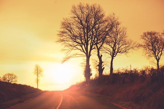 Autostrada wczesnym rankiem jesiennym. sylwetka drzew na tle złotego nieba