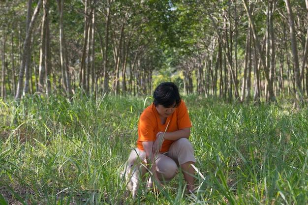Azja kobieta i pies przy gumowym drzewnym naturalnym lateksem