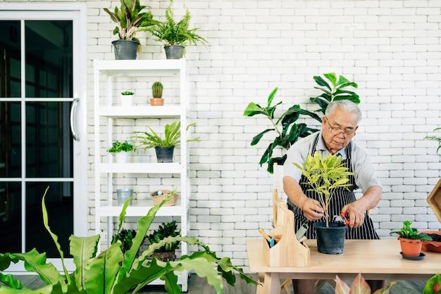 Azjaci, emerytowani dziadkowie, uwielbiają dbać o rośliny przycinając gałęzie roślin