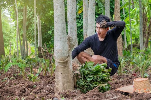 Azjaci są zmęczeni sadzeniem warzyw,