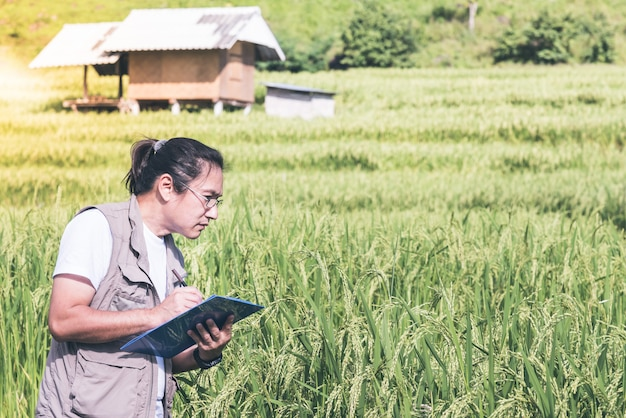 Azjatyccy mężczyźni rejestrują dane dotyczące roślin ryżu na rosnących polach