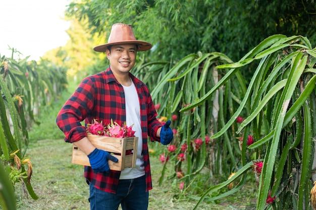 Azjatyccy rolnicy uśmiechają się w smoczym owocowym ogródzie.