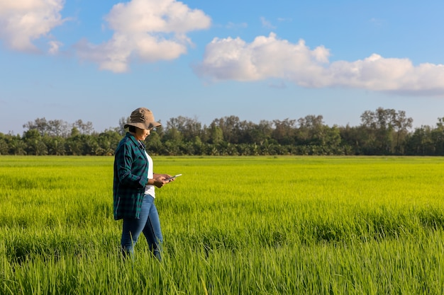 Azjatycka chłopska kobieta jest ubranym szkockiej kraty koszula w ryżowych polach