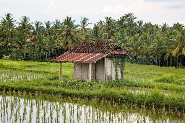 Azjatycka Farma. Dom Z Polami Ryżowymi I Dżunglą Palmową Premium Zdjęcia