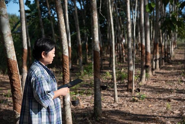 Azjatycka kobieta inteligentny rolnik rolnik pracujący na plantacji drzew kauczukowych