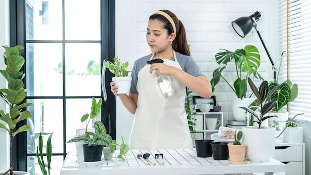 Azjatycka kobieta ogrodniczka trzyma garnek z rośliną i dba o rośliny, rozpylając wodę nawozową na rośliny w pokoju w domu, stojąc do hobby, koncepcja ogrodu domowego