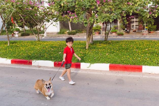 Azjatycki chłopiec spaceruje ze szczeniakiem pembroke corgi
