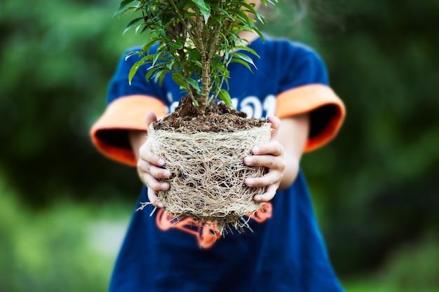 Azjatycki dziecko dziewczyny mienia młody drzewo dla przygotowywa flancowanie w ziemię jako save światu pojęcie