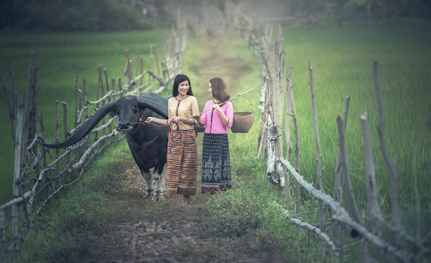 Azjatycki kobiety (tajlandzki) rolnik z bizonem w polu