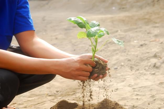 Azjatycki mężczyzna ręka trzyma drzewo nasion do sadzenia w glebie.