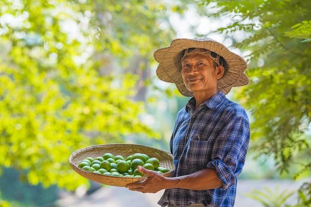 Azjatycki mężczyzna starszy rolnik z cytryną zielenią