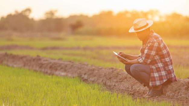 Azjatycki młody rolnik używa pastylkę przy zielonym ryżu polem