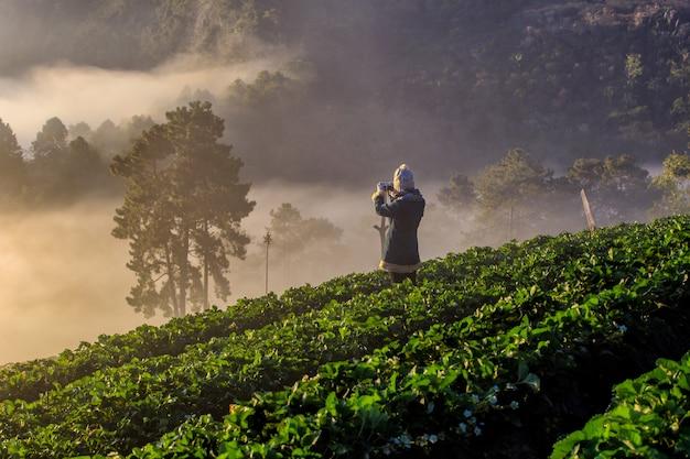 Azjatycki podróżnik wziąć zdjęcie mglisty poranek wschód słońca w ogrodzie truskawek