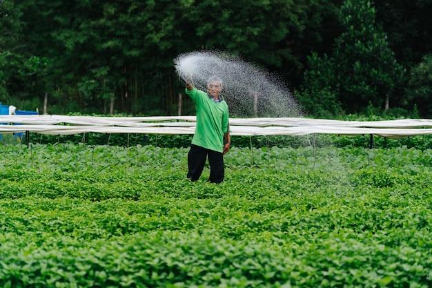 Azjatycki rolnik podlewania kiełków warzyw z gumową rurką na polach.