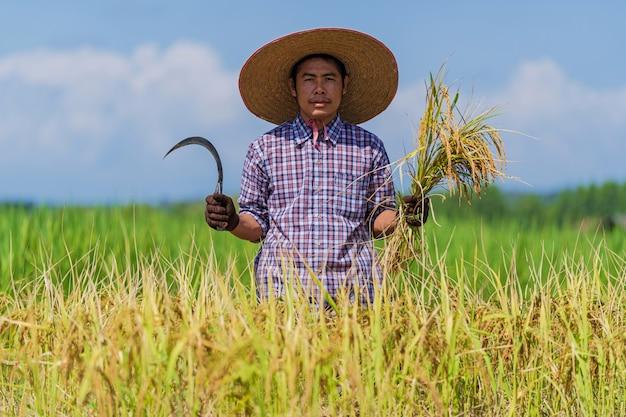Azjatycki rolnik pracuje w ryżu polu pod niebieskim niebem
