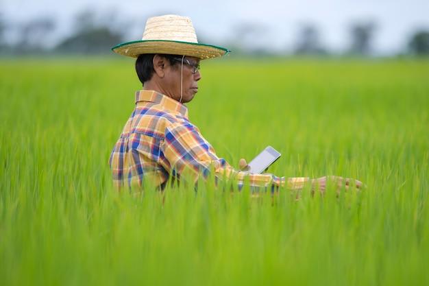 Azjatycki rolnik używa cyfrową pastylkę w zielonym ryżu polu
