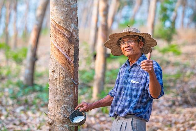 Azjatycki rolnik z filiżankami lateksowego drzewa kauczukowego na plantacji kauczuku