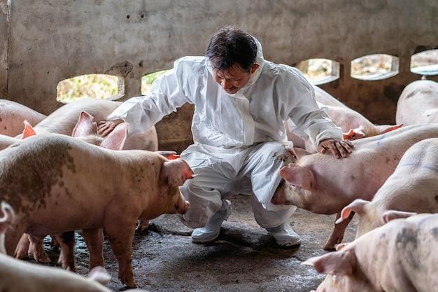 Azjatycki weterynarz pracujący i sprawdzający świnkę w hodowli trzody chlewnej, hodowli zwierząt i trzody chlewnej