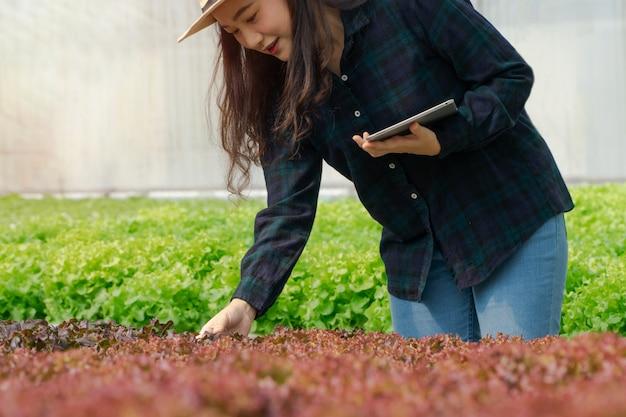 Azjatyckie kobiety trzymające zielony dąb w hydroponicznych gospodarstwach warzywnych i sprawdzające korzenie greenbo i jakości