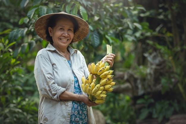 Azjatyckiej kobiety mienia średniorolny banan przy organicznie gospodarstwem rolnym. uśmiech na twarzy rolnika. gospodarstwo bananowe tajlandia.