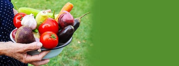 Babcia w ogrodzie z warzywami w dłoniach. selektywne skupienie. natura.