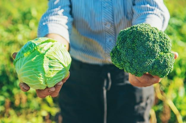 Babcia z kapustą i brokułami w dłoniach. selektywne ustawianie ostrości.