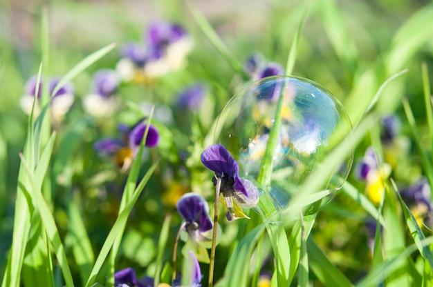 Bąbel na kwiatku, na tle trawy.