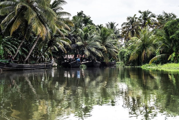 Back waters kerala india river
