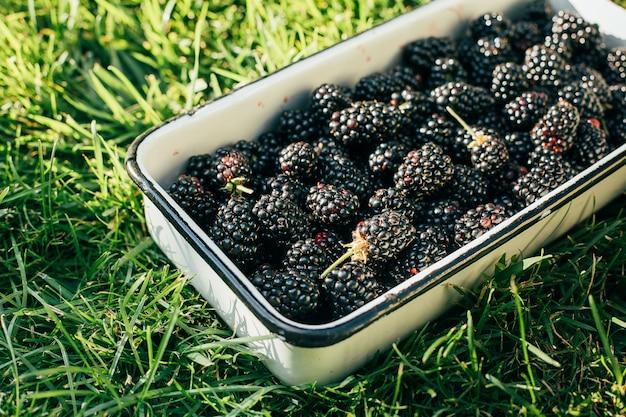 Backberrys w metalowej misce