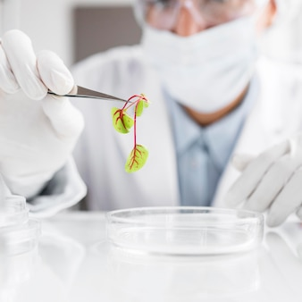 Badacz w laboratorium biotechnologicznym z rośliną i płytką petriego