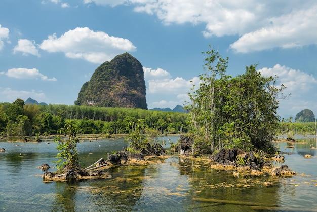 Bagna i las namorzynowy z błękitne niebo i górskie formacje skalne wapienia w klong root nong thale, krabi, tajlandia. znany cel podróży lub wczasowicz na kajak w tropikalnym kraju, siam.